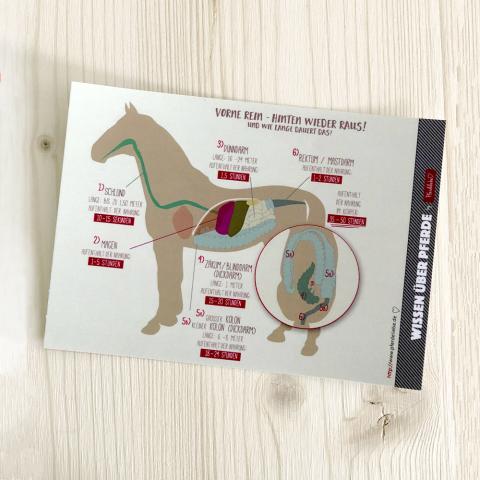 """Karte """"Vorne rein - hinten wieder raus"""" aus der Reihe Wissen über Pferde"""